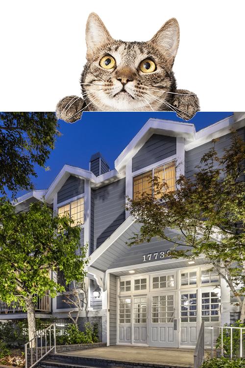 Pet friendly Apartments in Encino, CA